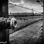 Auschwitz_002