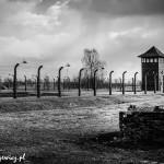 Auschwitz_008
