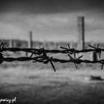Auschwitz_026